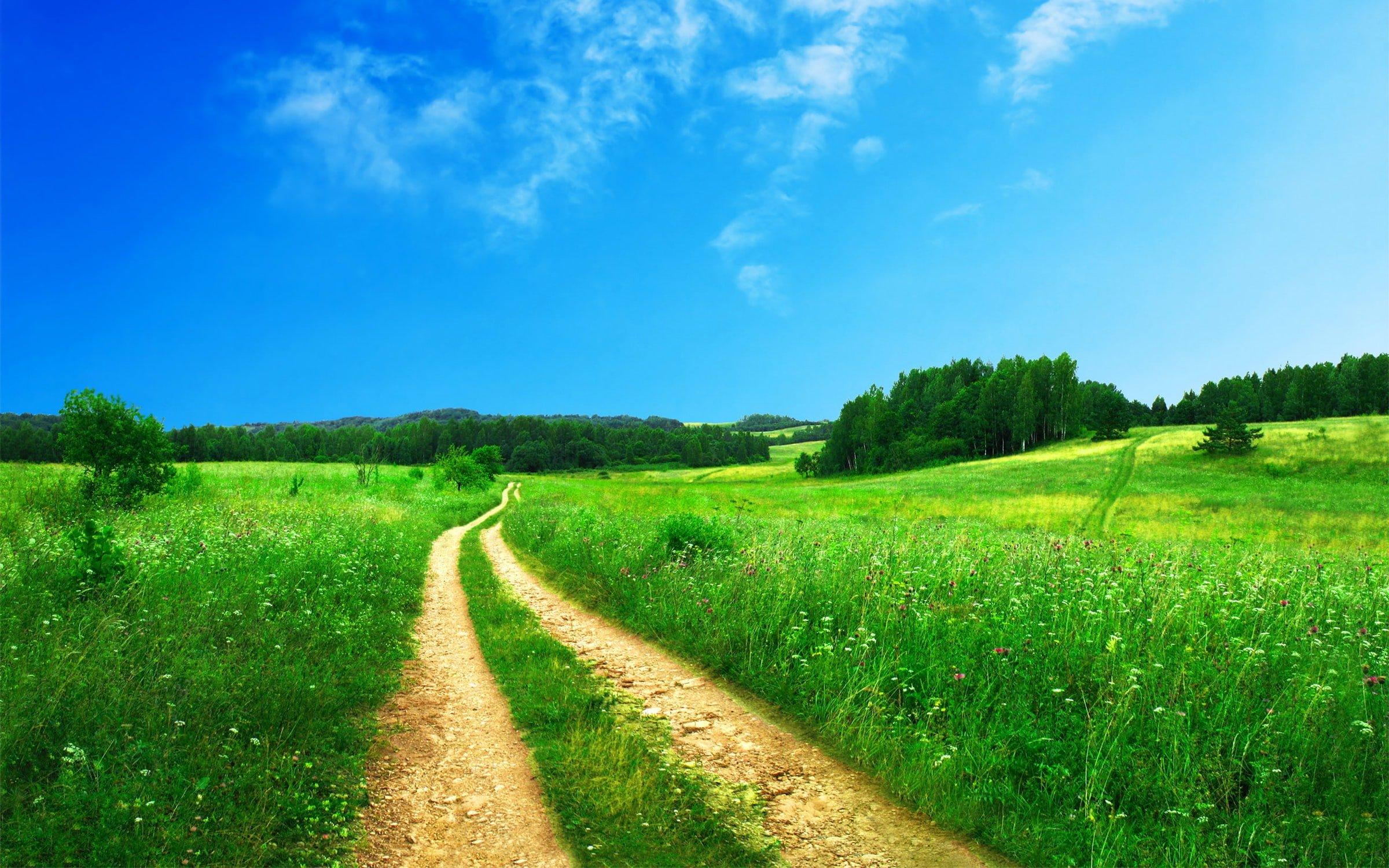 path towards a green field
