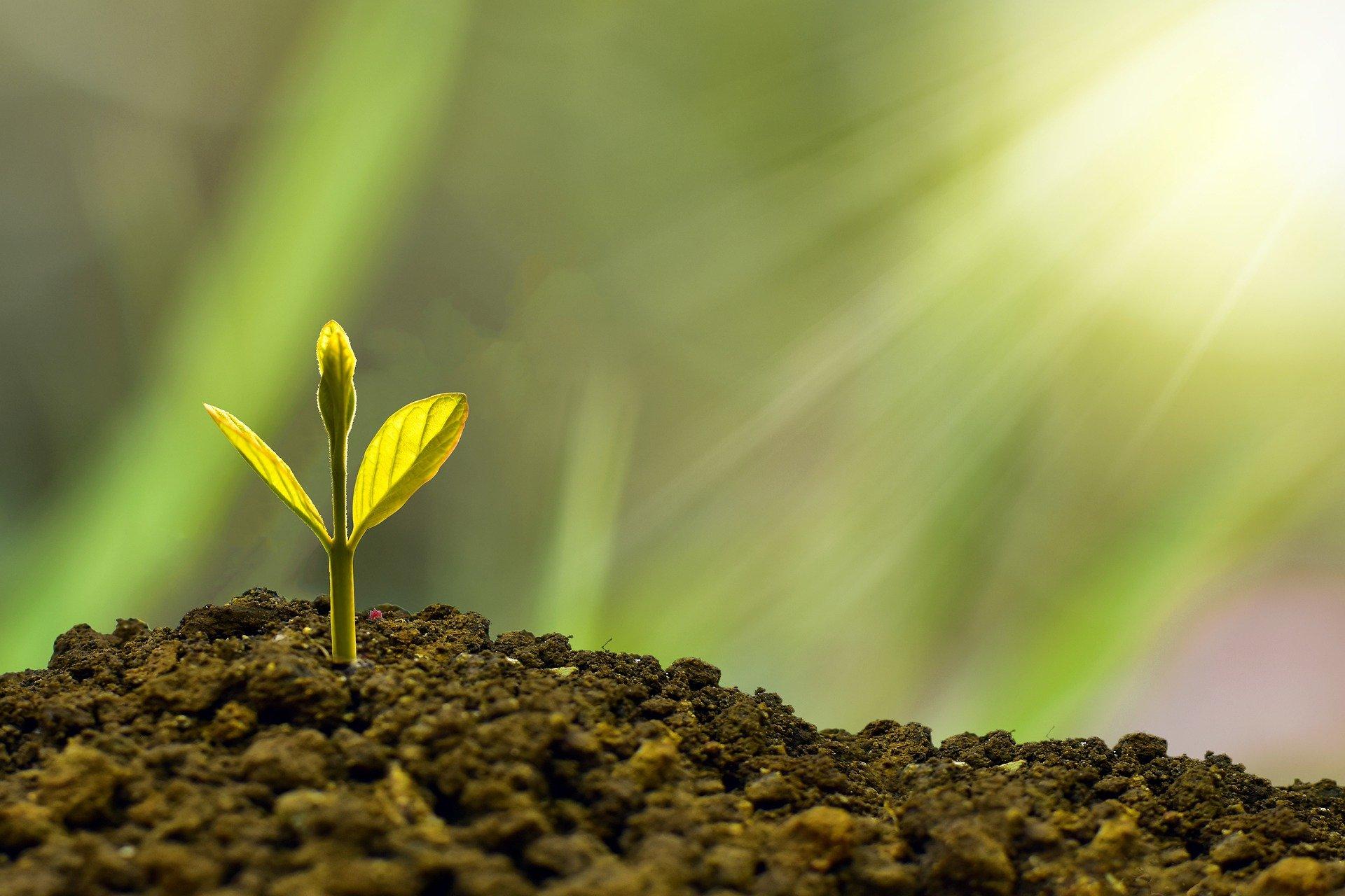 seedling growing on dirt