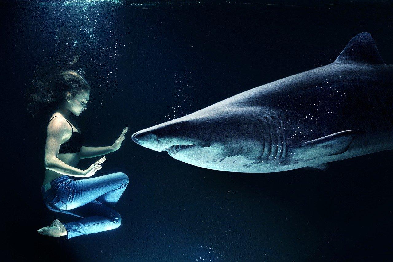 woman facing a shark