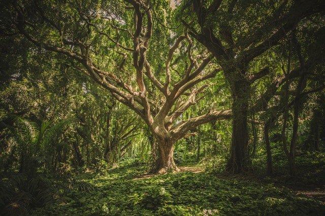 Rose Bush or Oak Tree
